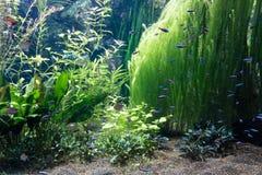 Aquário com alguns peixes tropicais Imagens de Stock Royalty Free
