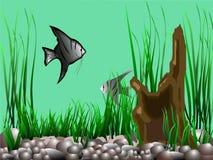 Aquário com angelfish, estação de tratamento de água e uma senão ilustração royalty free