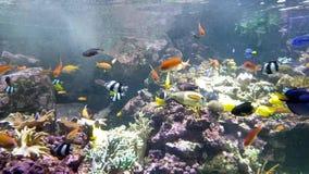 Aquário com muitos peixes agradáveis diferentes filme