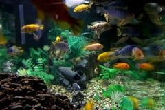 Aquário com os peixes bonitos, brilhantes fotos de stock