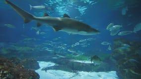 Aquário com peixes e tubarões filme