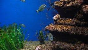 Aquário com plantas e os peixes coloridos tropicais video estoque