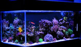 Aquário da água salgada, cena do tanque do recife de corais em casa foto de stock royalty free