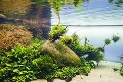 Aquário de água doce da natureza no estilo de Takasi Amano imagens de stock