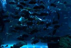 Aquário de Dubai Fotografia de Stock