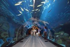 Aquário de Dubai em Dubaimall imagens de stock royalty free