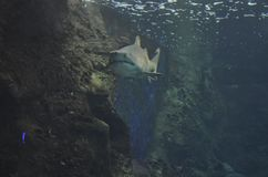Aquário de Heraklion na ilha da Creta de Grécia imagem de stock