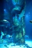 Aquário de Londres da vida marinha Imagem de Stock