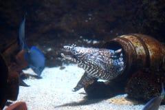 Aquário de Londres da vida marinha Foto de Stock