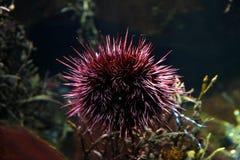 Aquário de Londres da vida marinha Fotos de Stock Royalty Free