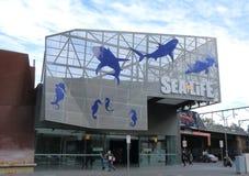 Aquário de Melbourne da VIDA MARINHA Fotos de Stock Royalty Free