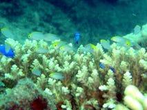 Aquário de peixes e do coral pequenos Foto de Stock