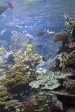 Aquário de peixes tropicais imagem de stock royalty free