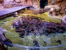 Aquário dos peixes foto de stock royalty free