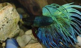 Aquário dos peixes Imagens de Stock