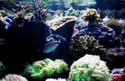 Aquário dos peixes fotografia de stock royalty free
