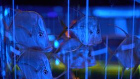 Aquário dos peixes no oceanarium Peixes bonitos que nadam na água transparente do aquário Tanque colorido do aquário enchido com filme