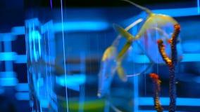 Aquário dos peixes no oceanarium Peixes bonitos que nadam na água transparente do aquário Tanque colorido do aquário enchido com video estoque