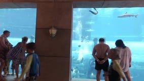 Aquário marinho com os peixes enormes para o ataque dos tubarões da atração no aquapark Aquaventure no estoque do recurso de Atla video estoque