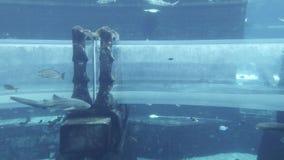 Aquário marinho com os peixes enormes para o ataque dos tubarões da atração no aquapark Aquaventure no estoque do recurso de Atla vídeos de arquivo