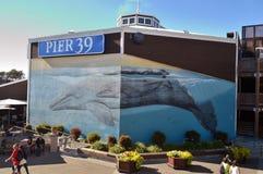 Aquário no aquário Pier39 Foto de Stock Royalty Free