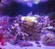 Aquário tropical da água salgada Fotografia de Stock Royalty Free