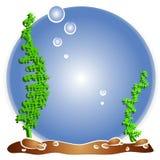 Aquário vazio dos peixes de Fishbowl Imagem de Stock