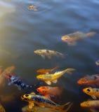 Aquí, a pescado, a pescado, a pescado Imágenes de archivo libres de regalías