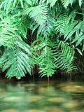 Aqua 4. Portrait photo of a lush indoor riverbank stock photography