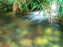 Aqua 5. Landscape photo of a lush tropical stream royalty free stock photo
