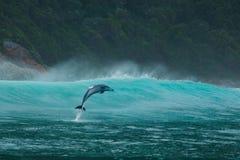 Aqua Aquatics photo libre de droits