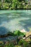 Aqua Azul waterfall on Chiapas Royalty Free Stock Photography