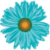 Aqua blue daisy flower Stock Photo
