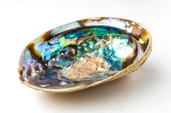 Aqua color of Abalone (Pao Hua Sea Shell) Stock Photography