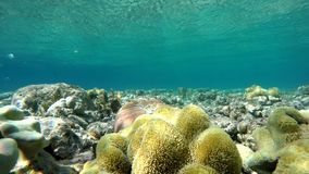 Aqua The corals and fish. Coral reef. Exotic fishes. The beauty of the underwater world. Life in the ocean. Diving on a tropical reef. Submarine life. Clear stock footage