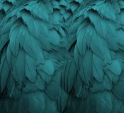 Aqua Feathers. I shot a photo of a crane, but on close examination realized I liked just the feathers Royalty Free Stock Photography