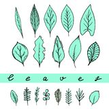 Aqua leaves set stock illustration