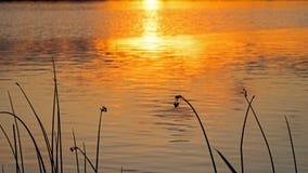 Aqua Plants Silhouetted At Sunrise imagem de stock royalty free