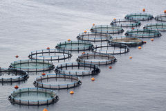 Aquaculture Royalty Free Stock Photography