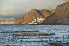 Aquaculture. Cages for breeding seabass in Tenerife, Canary Islands, Spain stock photo