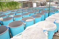 aquaculture cieplarni zima Zdjęcie Stock