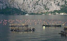 Aquaculture Stock Image