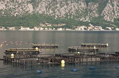Aquaculture Royalty Free Stock Images