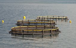 Aquaculture Stock Images