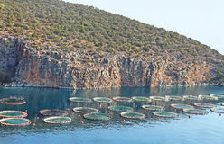 Aquaculture. In Greece.  provides a significant contribution to primary sector production in Greece. The sea  sector is dynamic and contributes significantly to stock photo