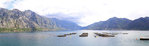 Aquaculture Montenegro Stock Images