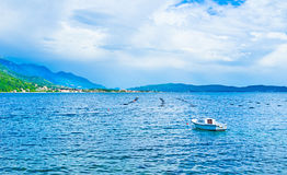 Aquaculture in Montenegro Royalty Free Stock Photography