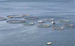 Aquaculture przy Grecja Zdjęcia Stock