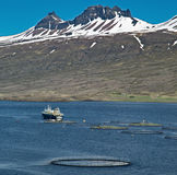 Aquaculture salmon fish farm. Aquaculture salmon fishing farm enclosure and boat in fjord Iceland sea fish farming in round net fishing industry Atlantic salmon stock photography