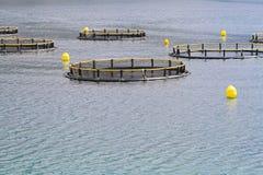 Aquaculture sieci Obrazy Stock